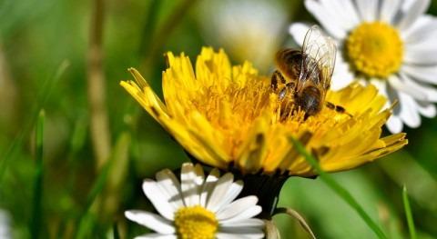 plantas aumentan variabilidad rasgos reproductivos cambio climático