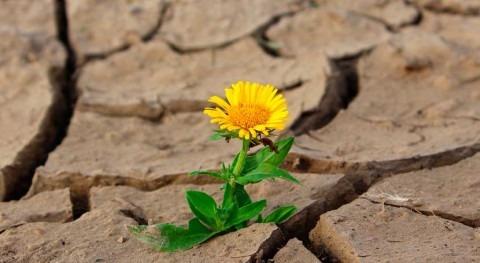 Salvador declara alerta roja 33 días sequía