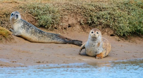 río Támesis cobra vida nacimiento 138 focas