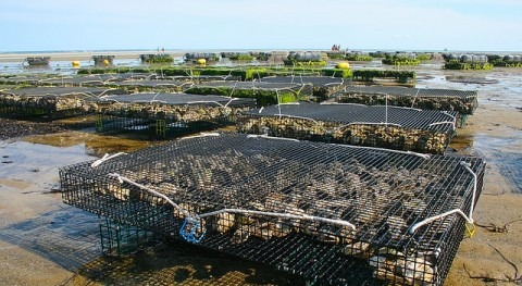 Crímenes Agua: Pescadoras Perlas (Parte 1)