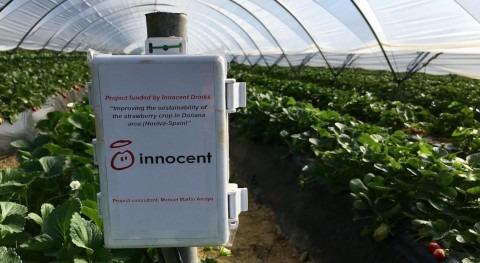 Innocent Drinks financia proyecto sostenibilidad entorno Doñana