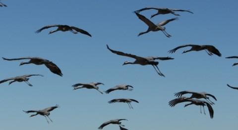 Patronato Reserva Natural Laguna Gallocanta aborda primer Plan Conservación