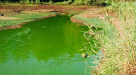 Mejillones y glifosato: nefastos calidad acuíferos