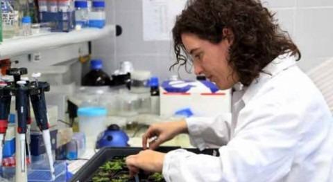 Goodberry: ¿Cómo mejorar cultivo frutos baya cambio climático?