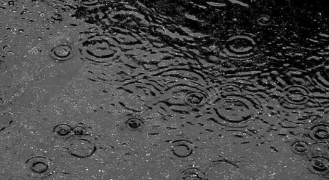 lluvias llegan buen momento cultivos andaluces, Asaja-Sevilla