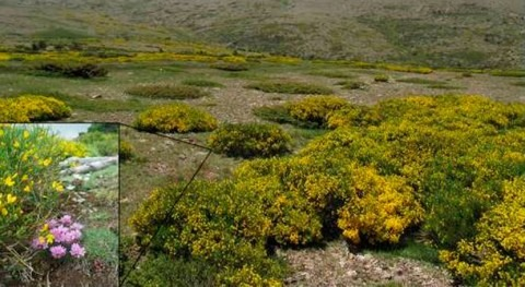 cambio climático afecta competencia plantas Sierra Guadarrama