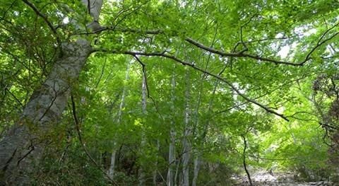 bosques europeos occidentales producen más semillas cuando primavera es seca y cálida