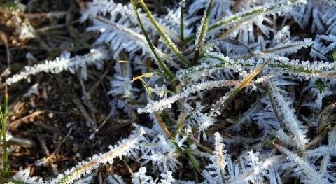 Emergencia agrícola heladas Chile