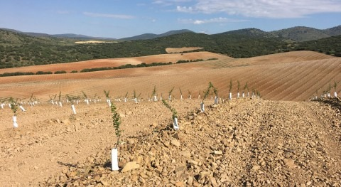 Hidromatic Ponent, expertos instalaciones riego agricultura