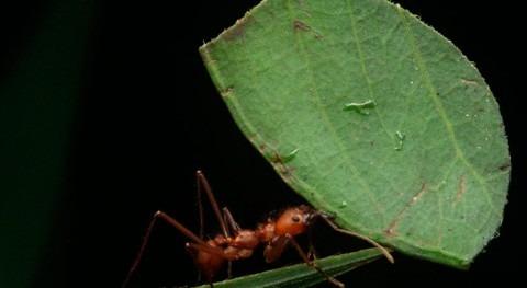 ¿Pueden hormigas contaminar tanto como depuradora?