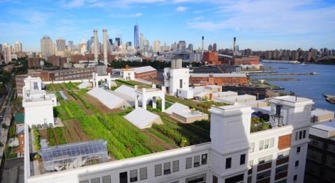 ¿Agricultura tejados?