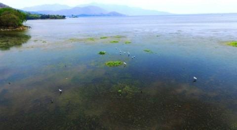 Presentados avances conservación biodiversidad humedales Salvador