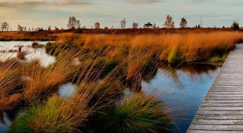 Ecosistemas agua dulce: punto partida nueva estrategia ONU Medio Ambiente y Google