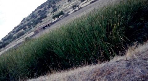 Depuración aguas residuales mediante humedales artificiales