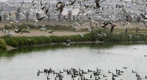 Perú fortalecerá seguridad hídrica protegiendo humedales