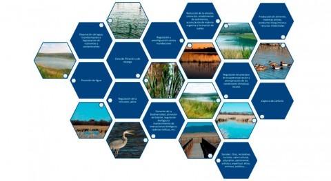 importancia valorar servicios ambientales humedales