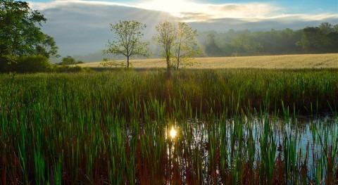 Humedales artificiales: solución basada naturaleza Día Mundial Agua