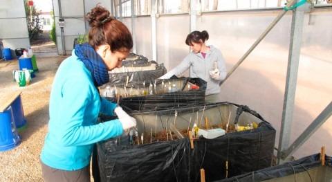¿Cómo reducir entrada nutrientes al Mar Menor?