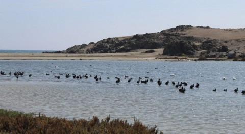 Chile prioriza conservación humedales costeros valiosa biodiversidad