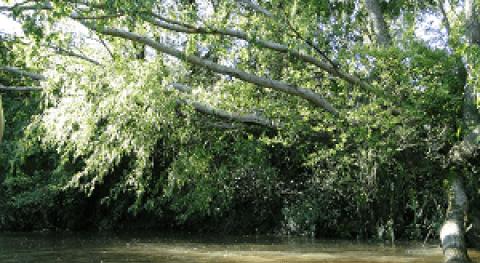Delta Paraná: Agua Paraíso natural y refugio privilegiado Letras