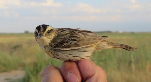 Mancha Húmeda es lugar descanso aves más amenazadas mundo