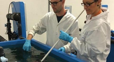 España es países mayor exposición disruptores endocrinos pescados y mariscos
