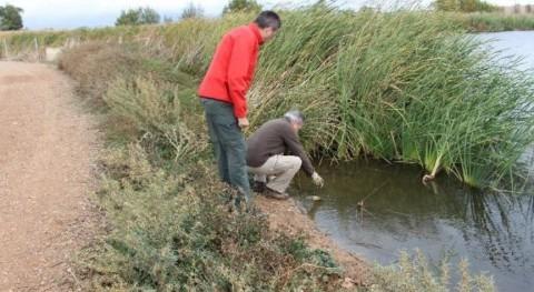 ¿Cómo mejorar calidad aguas Parque Nacional Tablas Daimiel?