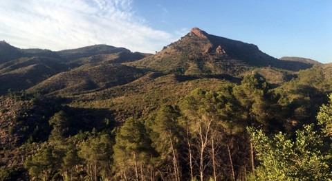 Impulsar investigación gestión forestal, clave mitigar impacto cambio climático