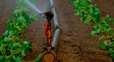 investigación alerta presencia patógenos emergentes agua reutilizada riego