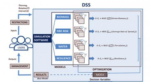 Investigadores IIAMA desarrollan software optimizar gestión forestal multiobjetivo