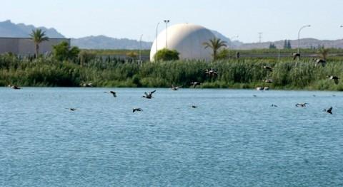Depuradoras Murcia suministran agua tratada y regenerada mantener diversos humedales