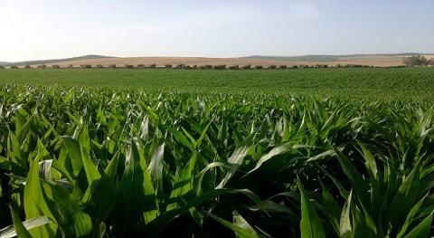 importancia riego precisión agricultura regadío