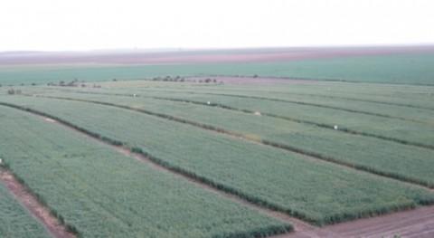 estudio UCO demuestra que siembra directa secano es más efectiva hidrológicamente
