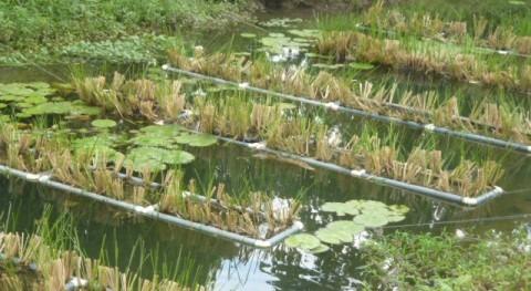 TJUE condena España incumplir legislación materia aguas residuales