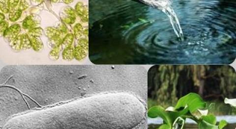 Biotecnología ambiental y tratamiento aguas