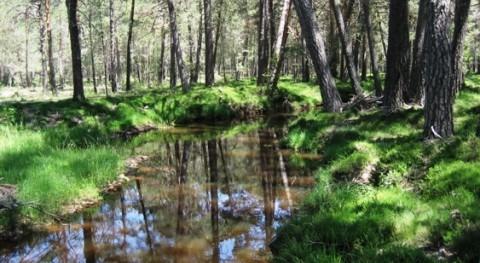 caso español. Agua y bosques: 7 aspectos que tal vez no conozcas (I)