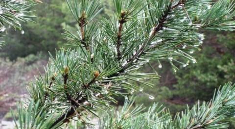 agua forestal es recurso natural clave España