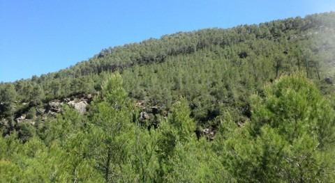 In aqua scribere. O gestión forestal base ecohidrológica bosques semiáridos