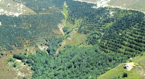 ¿Qué es selvicultura hidrológica? (II). Propuesta bases
