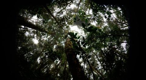 ¿Qué consecuencias tiene cambio climático bosques tropicales?