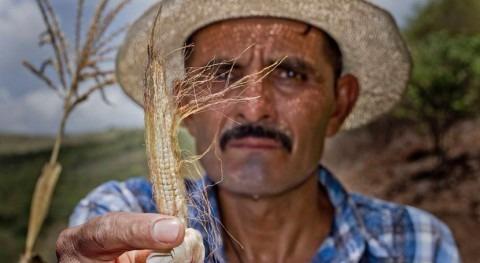 Resiliencia y agricultura sostenible: Claves frenar impacto Niño Corredor Seco