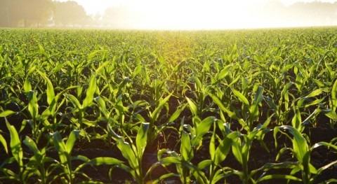 papel agricultura objetivos agenda 2030