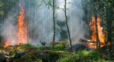 clima 'Tierra invernadero' puede estabilizarse largo plazo planeta