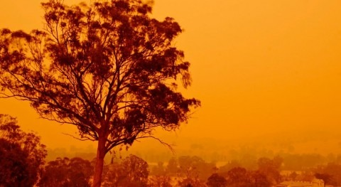 consecuencias calidad agua incendios Australia