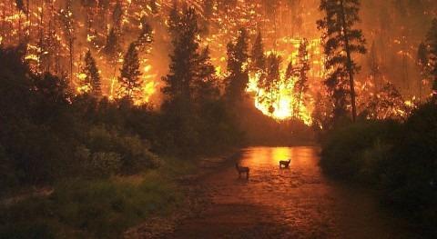 cambio climático causará incendios más intensos y frecuentes bosques América y Europa