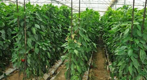 ¿Cómo hacer frente al cambio climático cultivos invernadero?