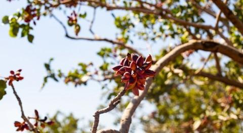 Regaber organiza jornada cultivo pistacho