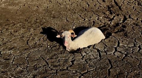 tesis Cátedra Aquae propone seguro agricultores basado indicadores sequía