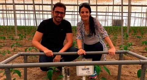 Trasplantes verano: Mejorar enraizamiento plantas fertirriego