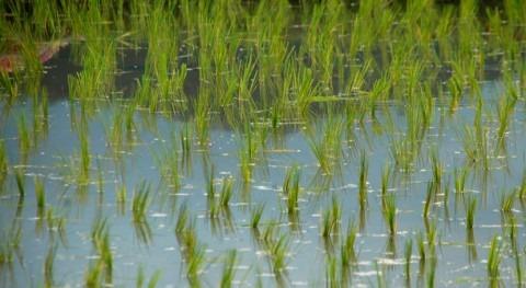 AEMA pone valor importancia garantizar agua limpia personas y naturaleza